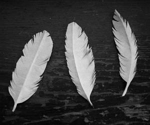 black and white, feather, and photography image
