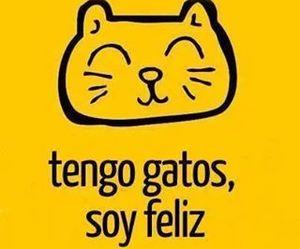 cats, feliz, and Gatos image