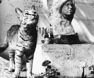 Jim Morrison, cat, and grave image