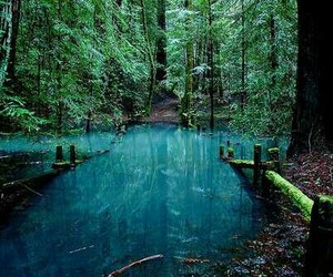nature, water, and forest image