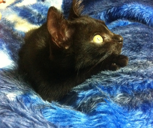baby, black cat, and love image