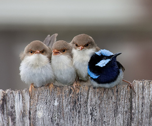 bird, cute, and animal image