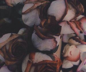 art, dark, and roses image