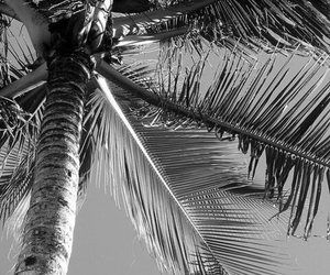 black and white, summer, and palmier image