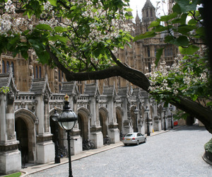 flowers, houses of parliament, and tree image