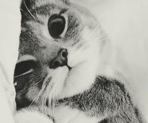 adorable, blanco y negro, and cat image