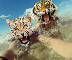 animals, beach, and leopard image