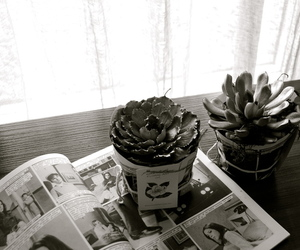 art, succulent, and b&w image