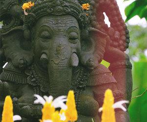 india and elephant image