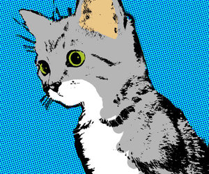 pop art and cat image