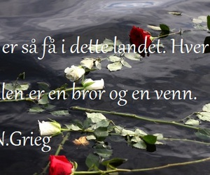 hope, norway, and roses image