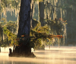 bayou, intriguing, and louisiana image