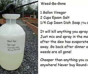 diy and weed killer image