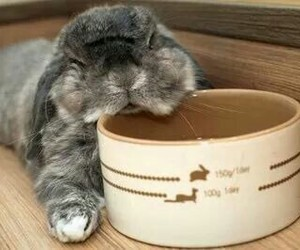 bunny, pet, and cute image