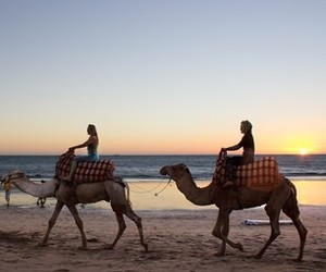 beach, camels, and girls image