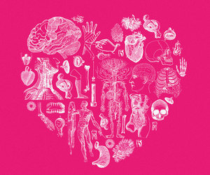anatomical and heart image