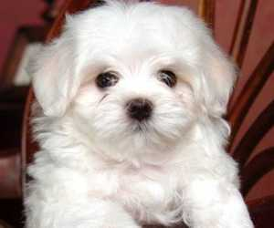 cute animals, dogs, and puppy image