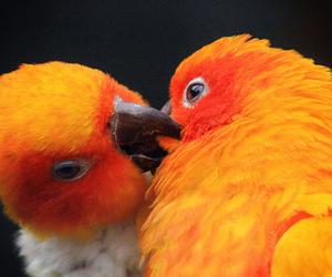 bird and kiss image