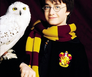 harry potter, daniel radcliffe, and hedwig image