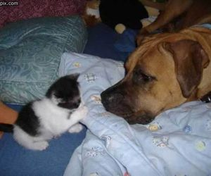 animals, kittens, and dogs image