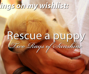 before i die, boy, and cute puppy image