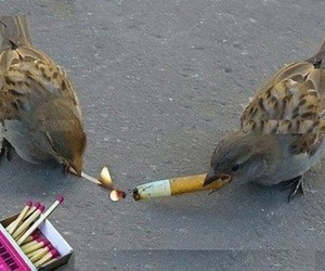 bird, cigarette, and grunge image