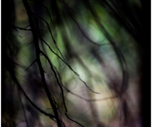 branches, forest, and landscape image