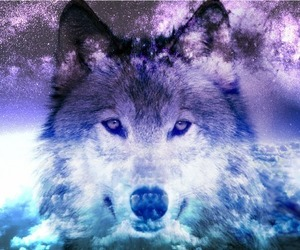 wolf, galaxy, and animal image