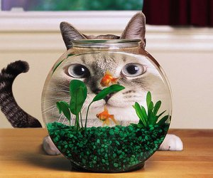 cat, lol, and fish image