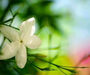 faith, green, and fragrance image