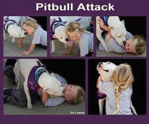 dog, girl, and pitbull image