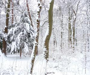 forest, germany, and winter image