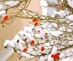 berries, winter, and Holly Becker image