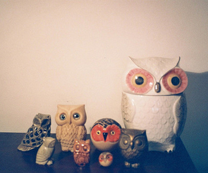 animals, collection, and owl image