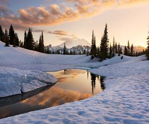 evening, nature, and winter image