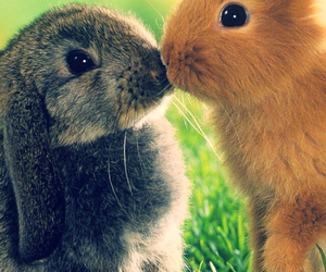 rabbit, kiss, and animal image