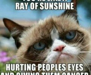 funny, cat, and grumpy cat image