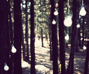 forest, light, and trees image