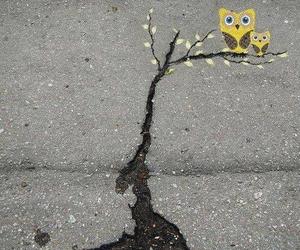 owl, street art, and art image