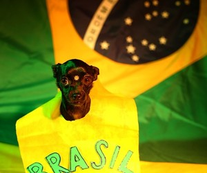 brazil, world cup, and cute image