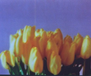 analog, flowers, and zenit image