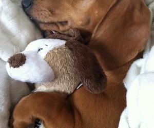 dog, salchicha, and bed image