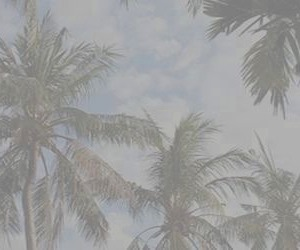 pale, palm trees, and sky image