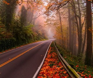 foggy, forest, and landscape image