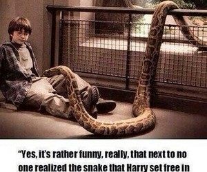 harry potter and nagini image