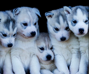 animals, dogs, and cute image