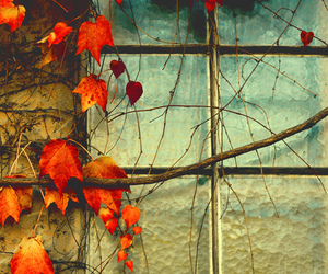window and leaves image