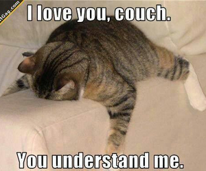 cat, couch, and funny image
