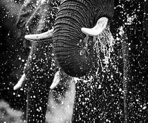 animals, black and white, and blanco y negro image