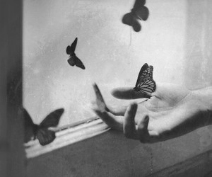 black and white, butterfly, and hand image